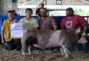 Gill Derryberry: Reserve Supreme Barrow  2015 Tennessee State Fair