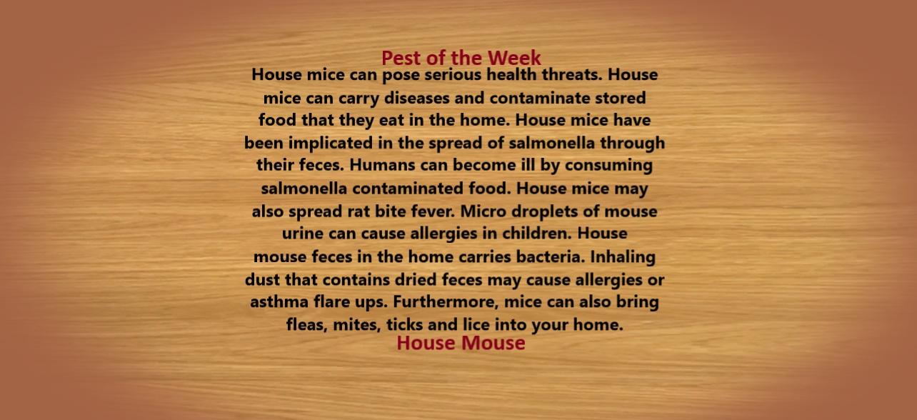 https://0201.nccdn.net/4_2/000/000/001/852/House-Mouse-Threats-1284x588.jpg