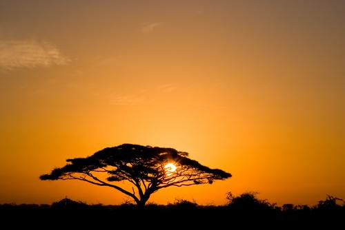 East Africa Photo Safari
