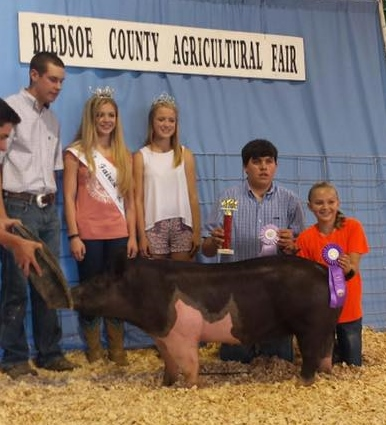 Bow Family Bledsoe County Fair Champion Breeding Gilt  Reserve Overall Championship