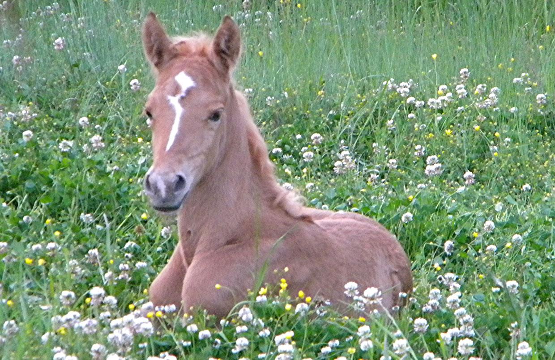 Deja Too Foal