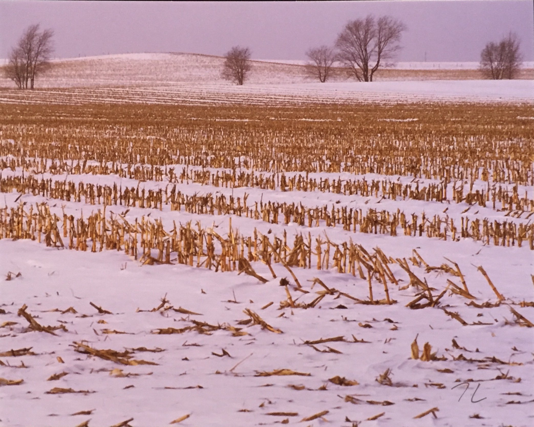"Cornfield in Winter Photography 8"" X 10"" $25."
