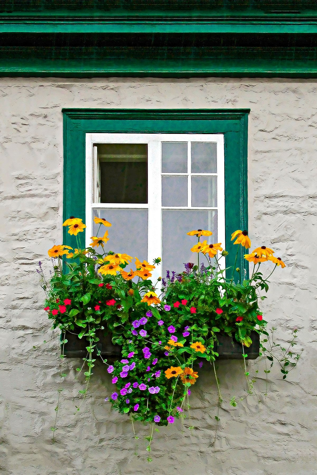 WINDOW-BOX - We saw this window as we were walking back to our car after spending a day in the rain in Quebec.  As I was about to photograph it, some one closed the window,and then saw me, opened it back up and moved aside. He must have been a photographer!