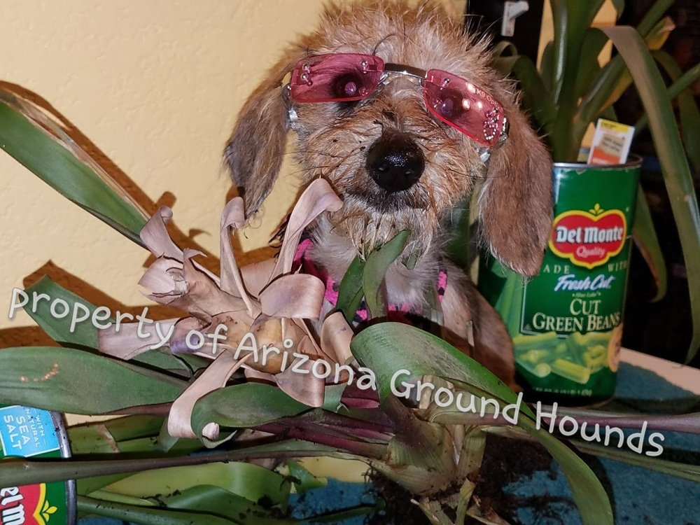 Dog with pink glasses