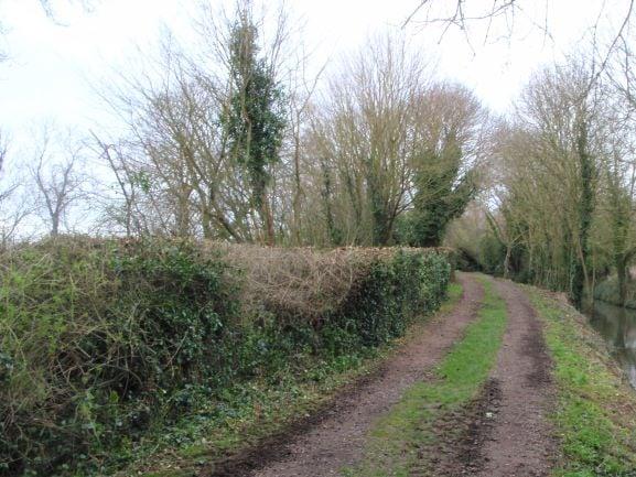 Hedge Cutting - Cambridgeshire