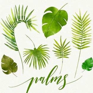 https://0201.nccdn.net/4_2/000/000/008/486/leaves-watercolor-palms_23-2147616780--2--314x314.jpg