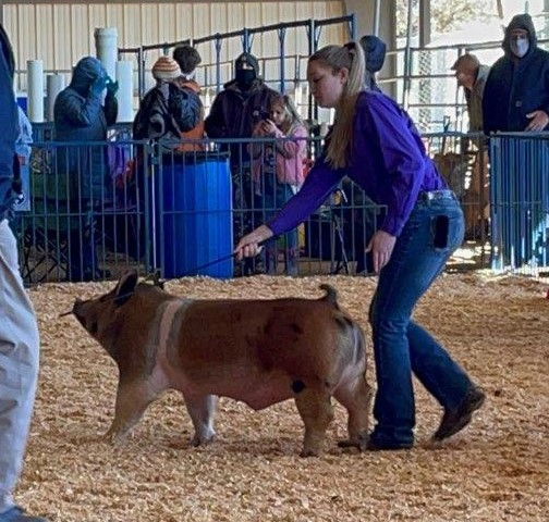 Regan Black Reserve Champion Prospect Pig 2021 Tennessee State Virtual Show