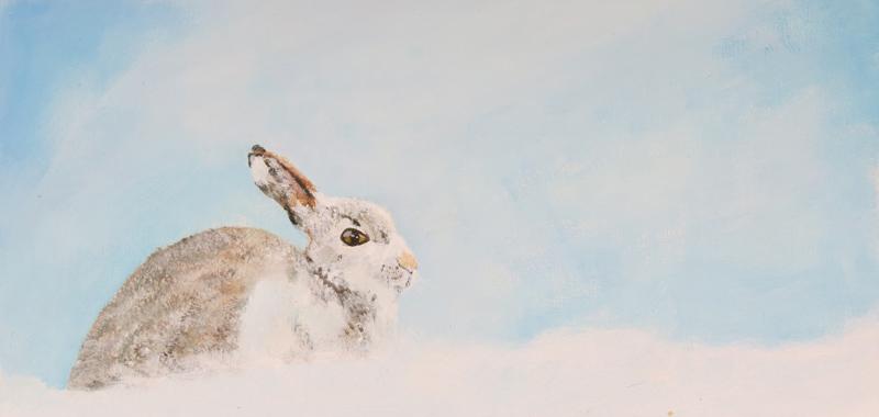 https://0201.nccdn.net/4_2/000/000/008/486/snowwabbit-web.jpg