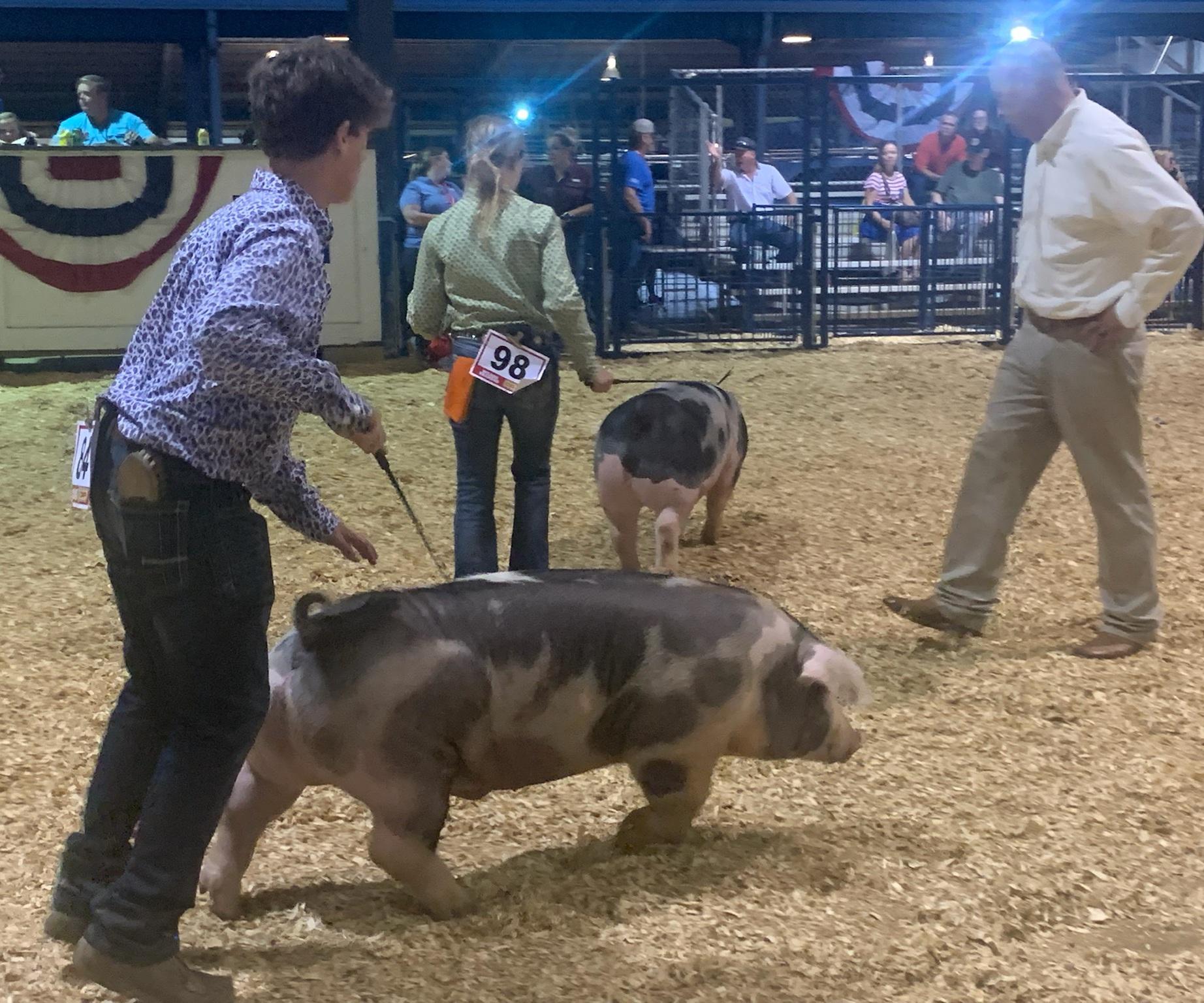 Judd Crownover 2021 Tennessee State Fair Champion Spot Barrow