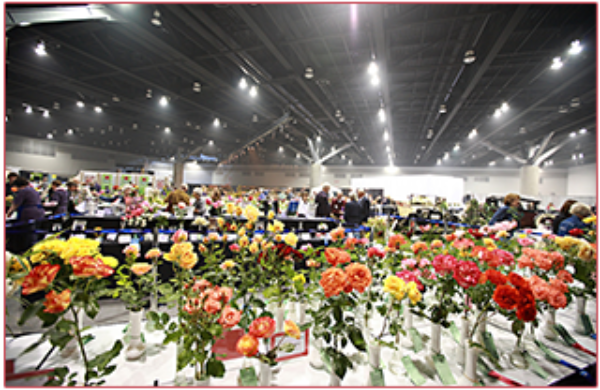 The World Rose Convention and Festival attracted visitors and participants from around the world and featured the largest rose show and festival ever staged in Vancouver.