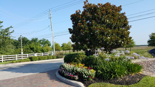 Driveway Side Plants