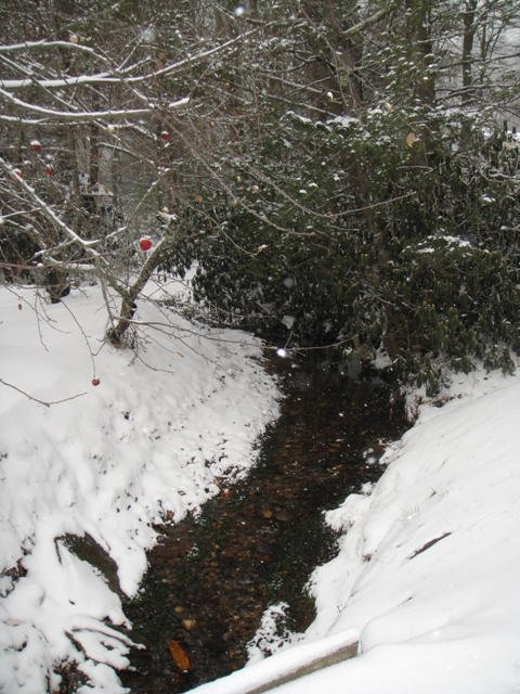 Snow covered apples hang over the creek.