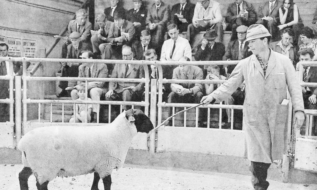 Dick Gough at Sheep Sale at Bury Livestock Market in 1965