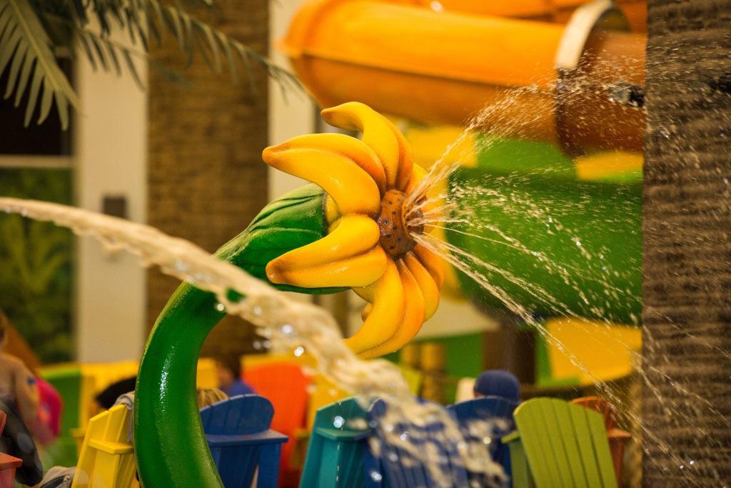 https://0201.nccdn.net/4_2/000/000/00d/f43/Spray-Sunflower-1024x683.jpg