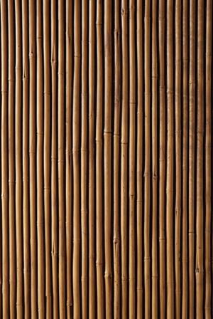 El César - Bambú