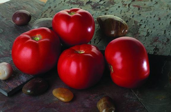 Tomato Red Pride F1