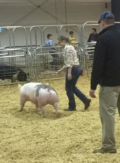Aspen King 2017 TN State Market Hog Show 1st in Class