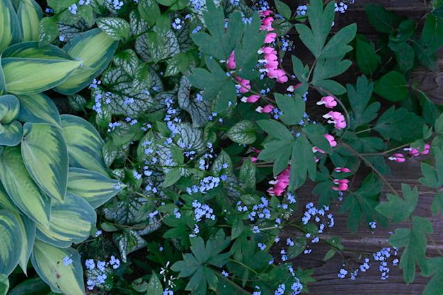 Gorgeous combinations in Sanda's garden.
