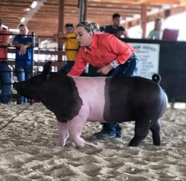 Lena Stricklen 2018 Phelps County Fair, Missouri Reserve Grand Champion Overall Reserve Grand Champion On Foot