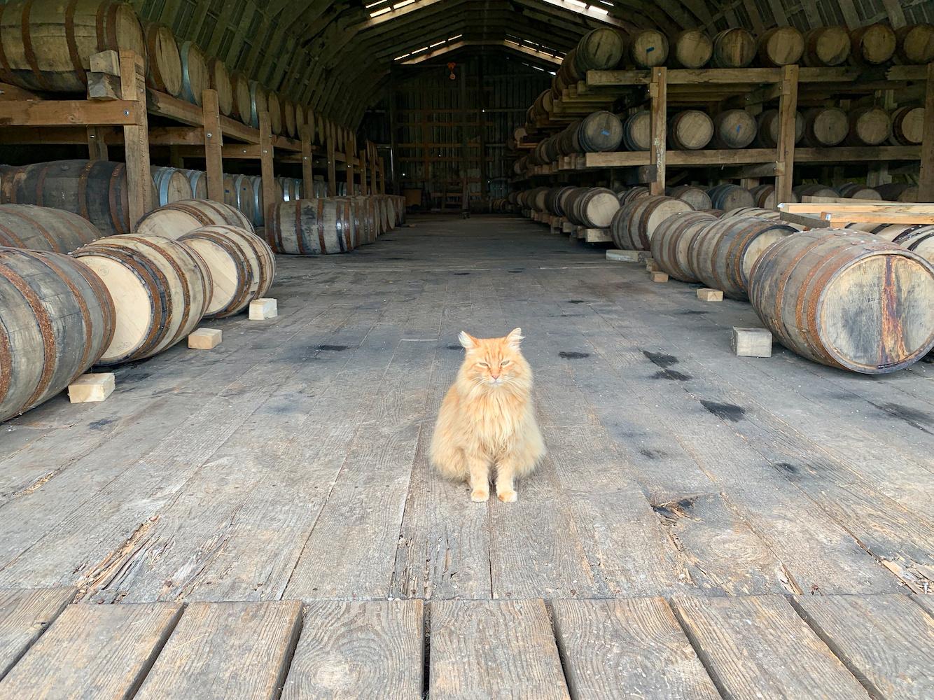 MB Roland Rickhouse & Cat