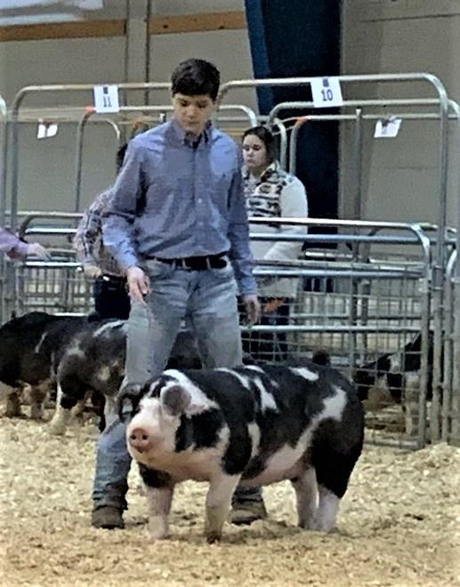 Matt Roach 2020 Tennessee State Swine Show Reserve Champion Spot Gilt