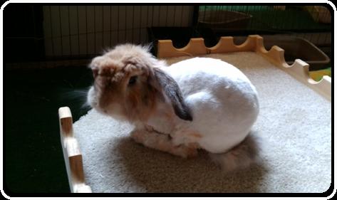 Rabbit Boarding Services