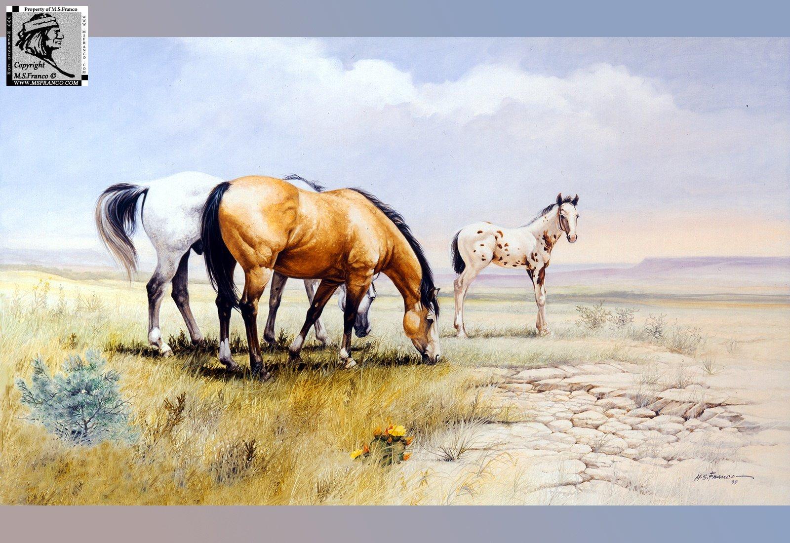 """"""" Quien Sabe Ranch """""""