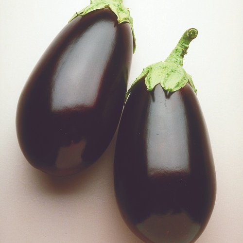 Eggplant Night Shadow