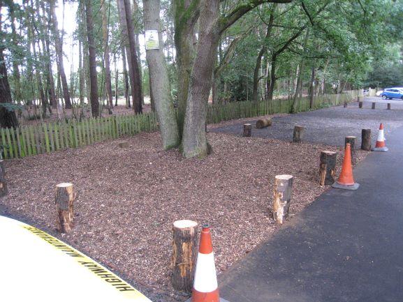 Tree Works - Bedfordshire