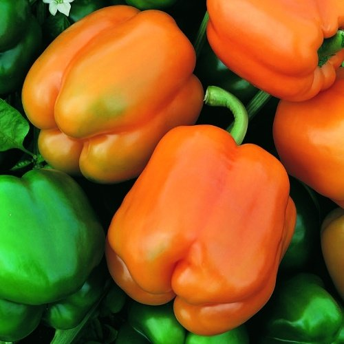 Pepper Muscato