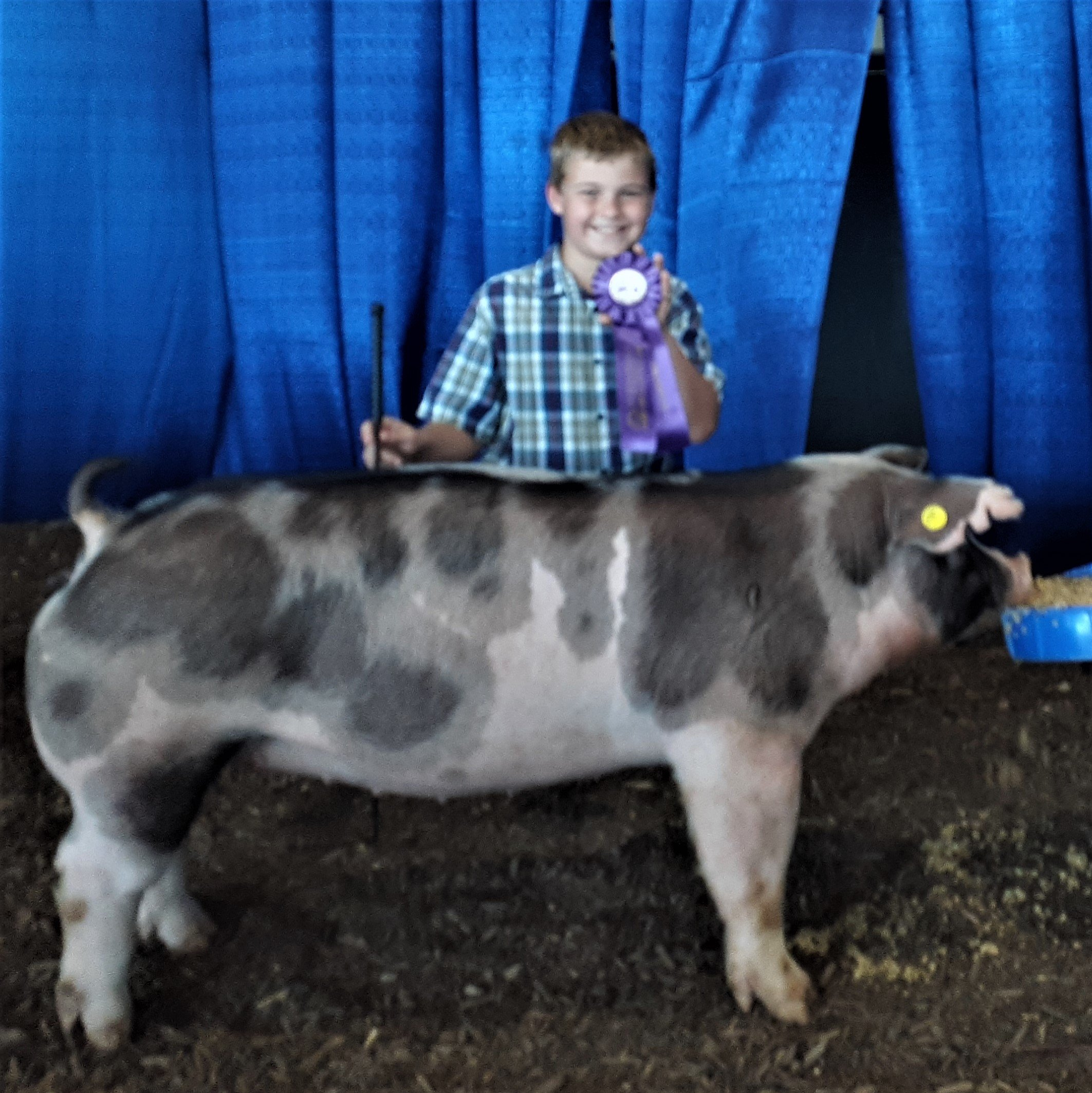 Declan Lusk 2021 Tennessee State Fair Champion Spot Gilt