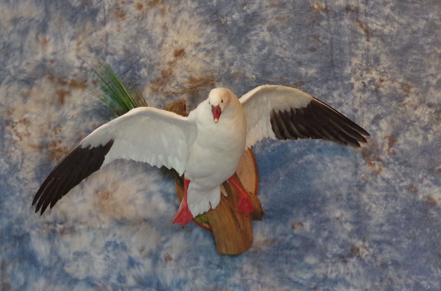 ross-goose