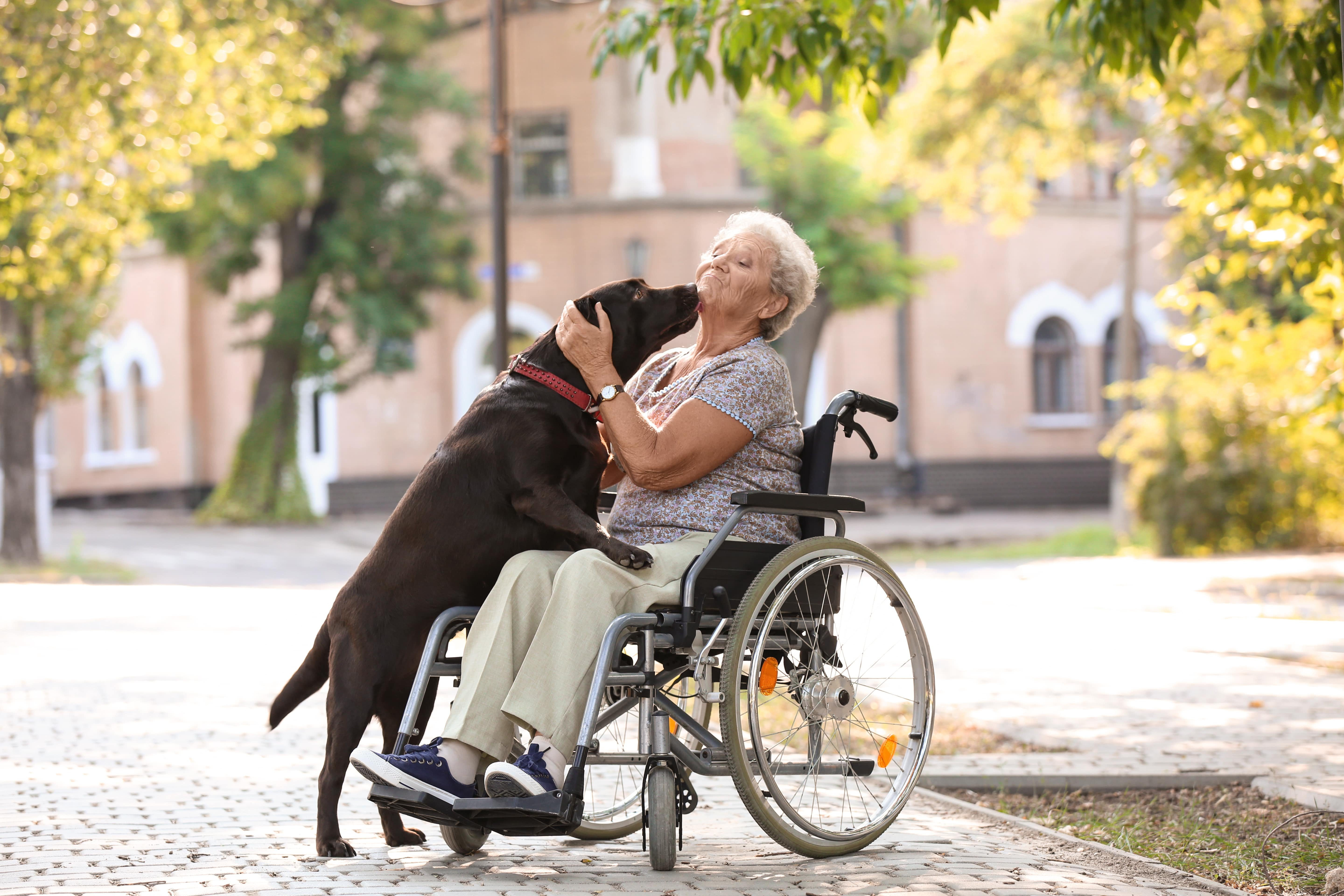 Senior Woman In Wheelchair And Her Dog Outdoors