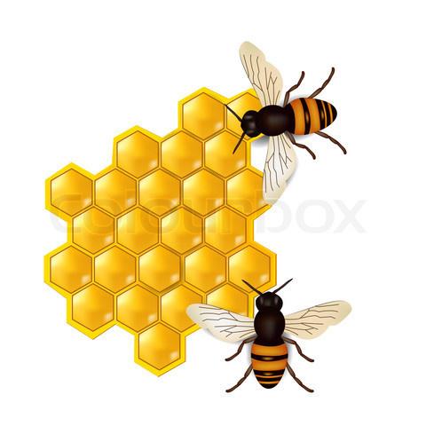 honeycombs-with-honey-bees.jpg