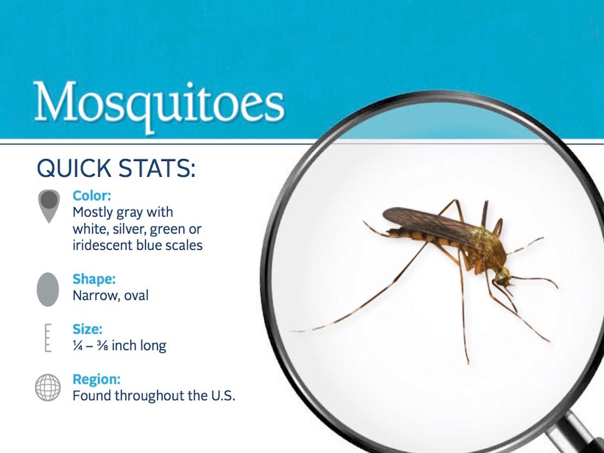 https://0201.nccdn.net/4_2/000/000/023/130/mosquito-pest-id-card_front.jpg