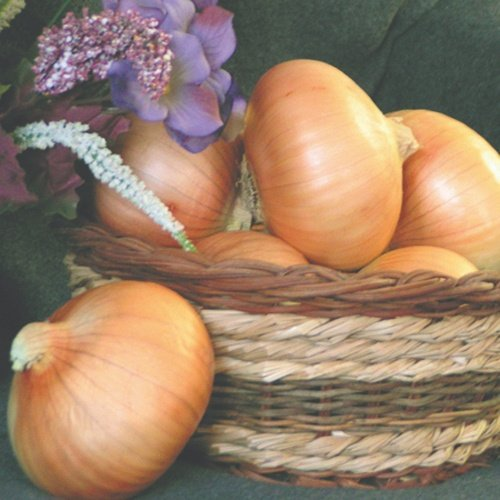 Onion Sapelo Sweet