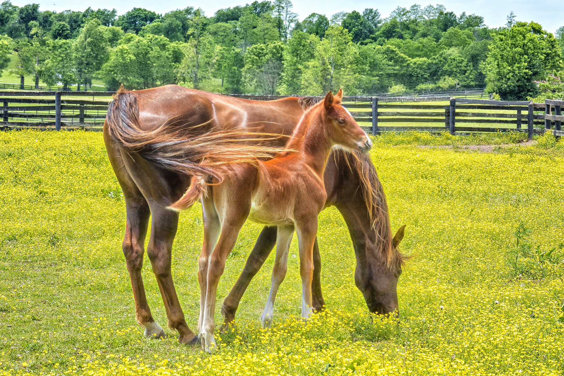 MOM AND BABE - Taken on a drive through central Kentucky in the spring. At that time of the year you are given many oppoirtunities for shots like this.