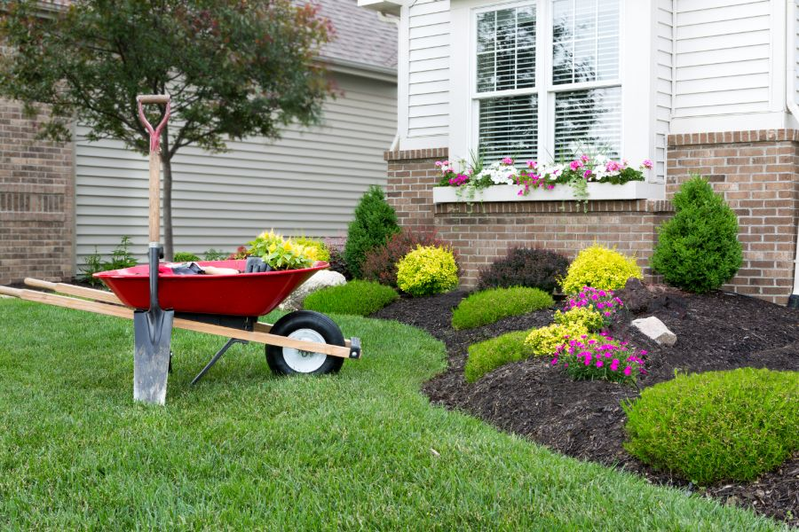Planting a celosia flower garden