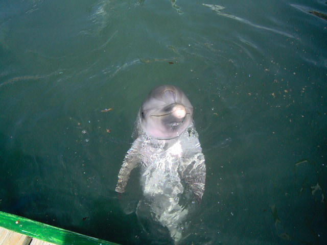Who can resist meeting Flipper?