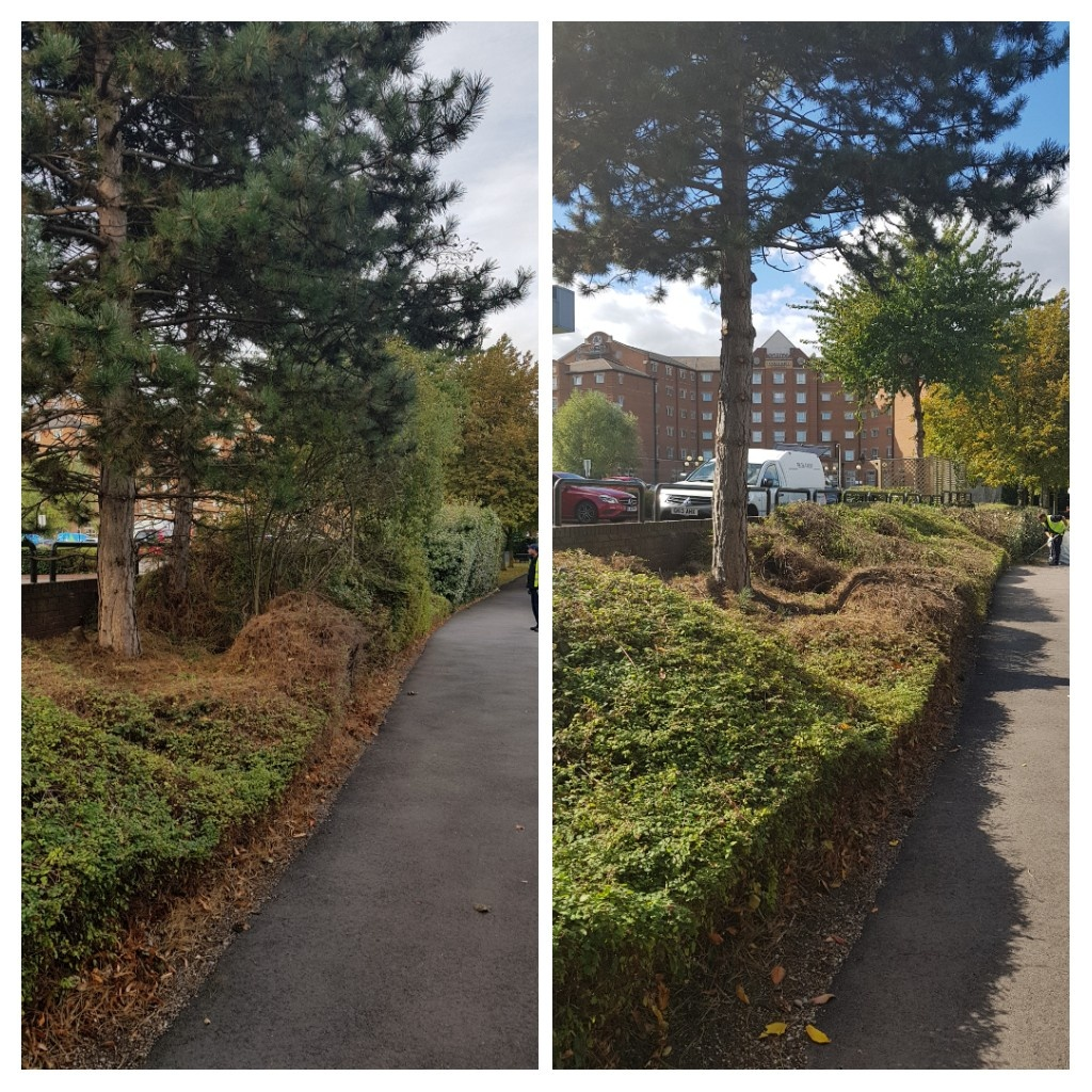 Before and after cutting back of branches and hedging