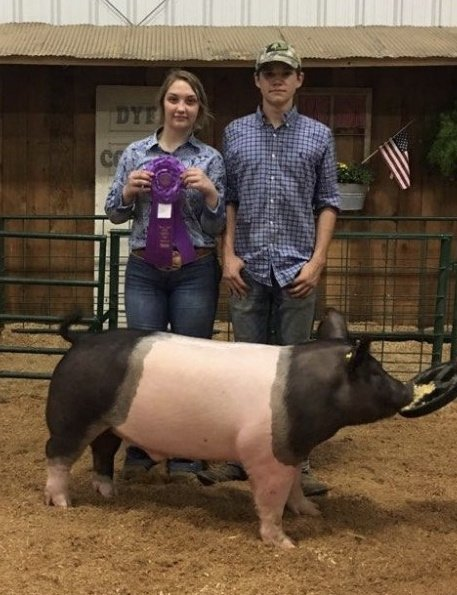Gracee Woods and Matt Roach 2019 Dyer County Fair Reserve Champion Cross Barrow Reserve Champion Spot Gilt Reserve Champion Chester White Gilt Reserve Champion Spot Barrow