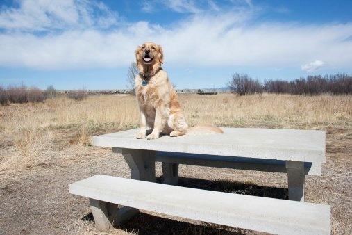 Dog on Concrete Picnic Table