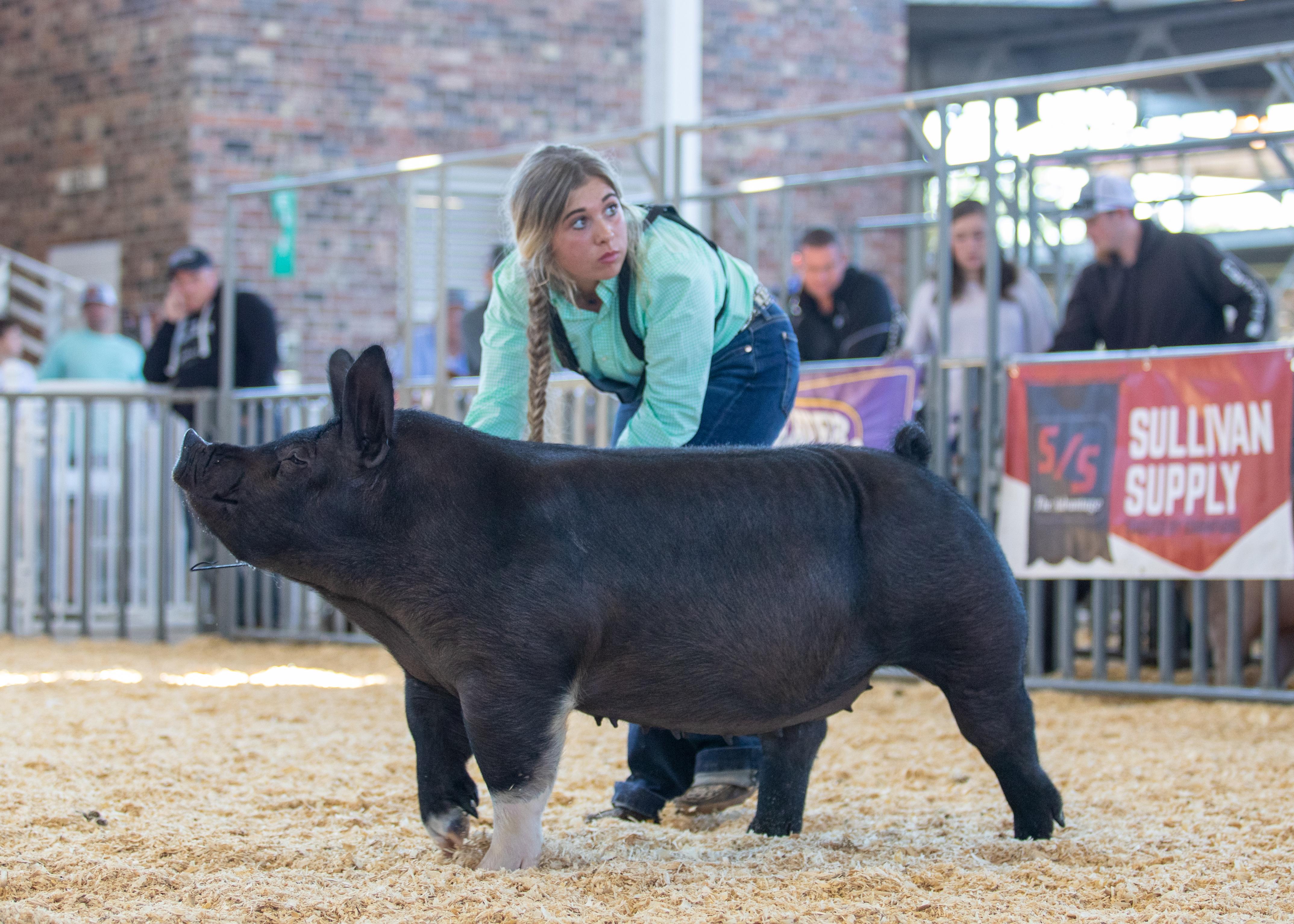Lena Stricklen 2020 Phelps County Fair, Missouri Supreme Gilt Overall