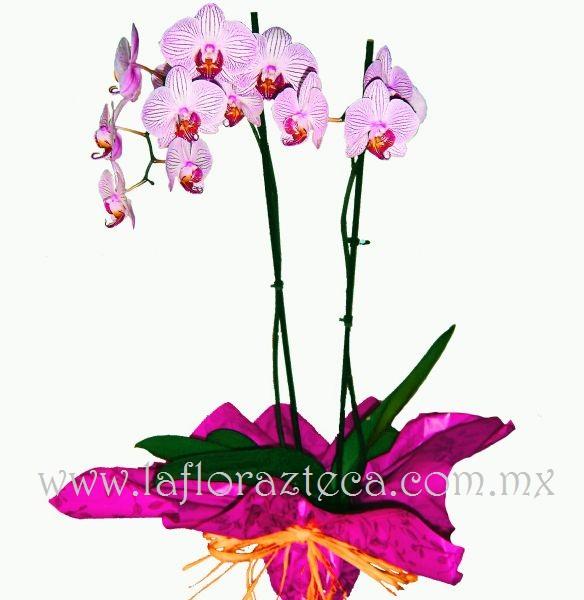 MD - 111  $1,980 Orquídeas phanelopsis * Consulta disponibilidad de colores