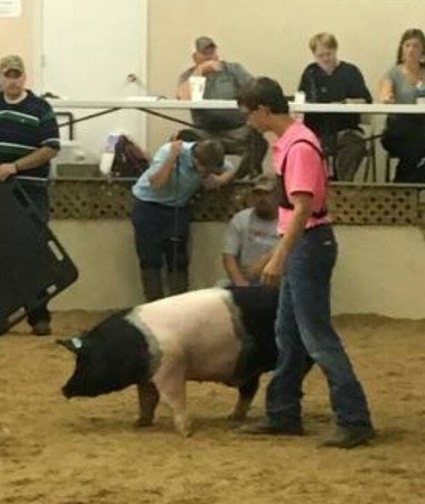 Andrew Thompson Champion Carcass Hog 2016 Henry County Fair
