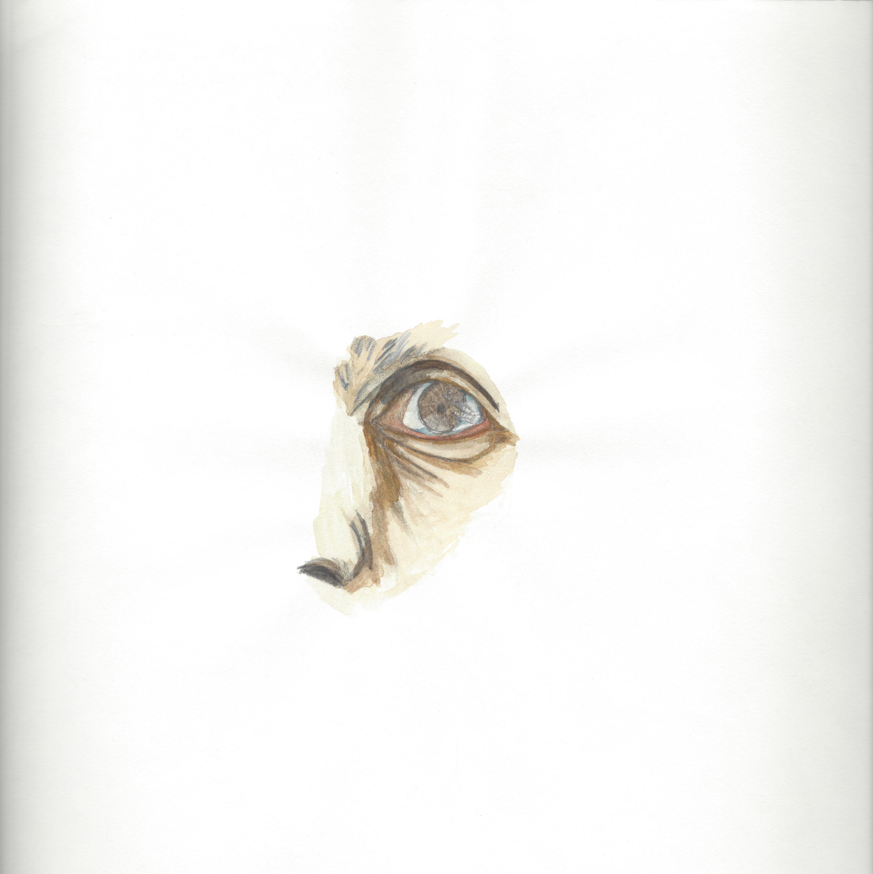 La otra mirada, 2015 Acuarela sobre papel 20 x 20 cm