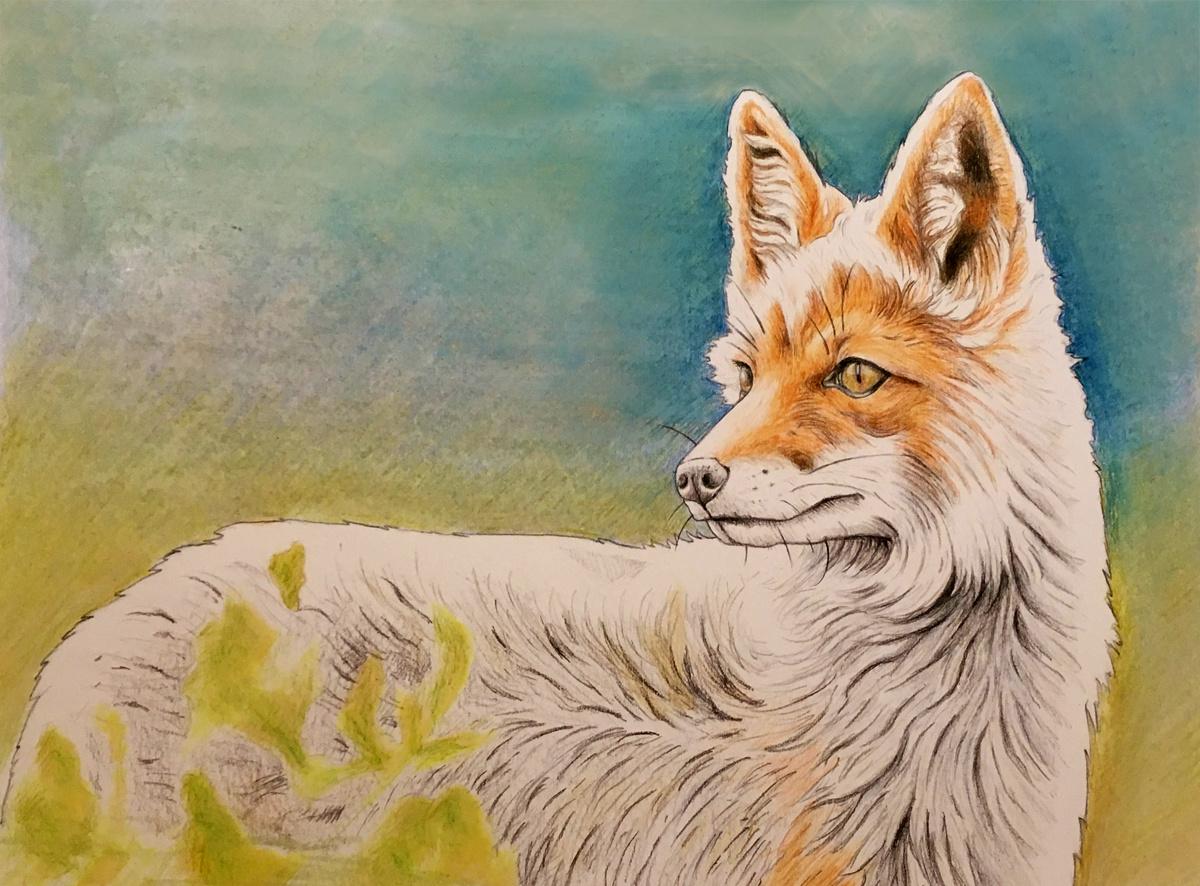 Fox, 2015 Watercolor on Paper 16 in × 12 in