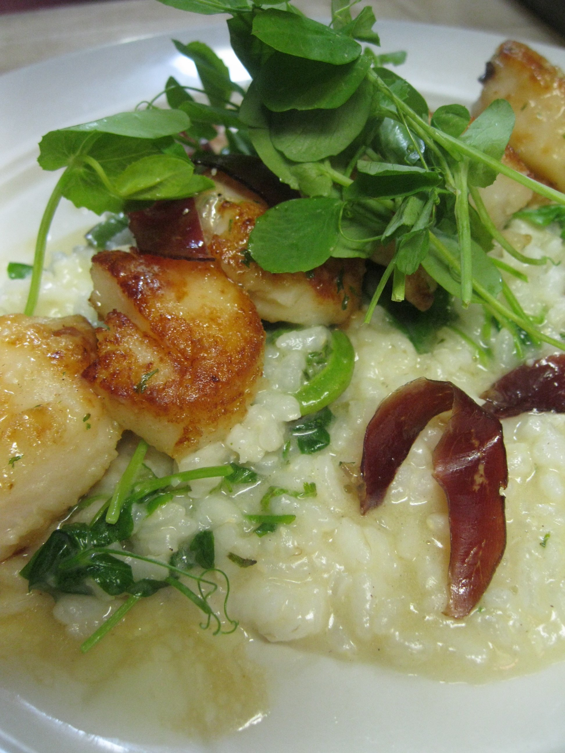 Seared  dayboat scallops with a fiddlehead risotto and duck prosciutto
