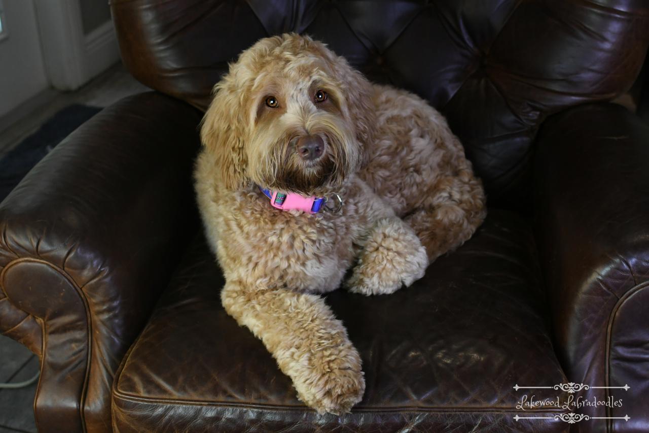 Jazz Sitting Dog