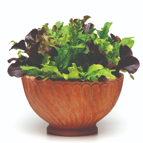 Greens SimplySalad® Alfresco Mix